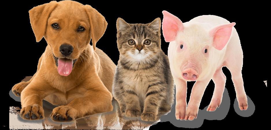 pets rescue