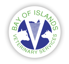 Bay of Islands Vets