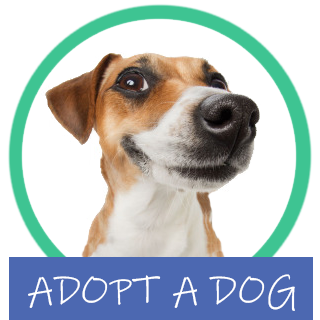 Bay of Islands Animal Rescue dog adoptions