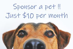 Bay of Islands Animal Rescue - Sponsor a Dog