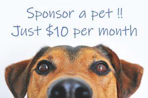 Bay of Islands Animal Rescue - Sponsor a Dog