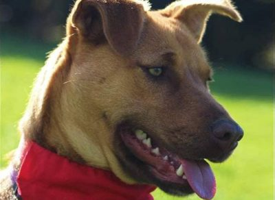 Bay of Islands Animal Rescue - Dog rescue, rehoming and adoption.