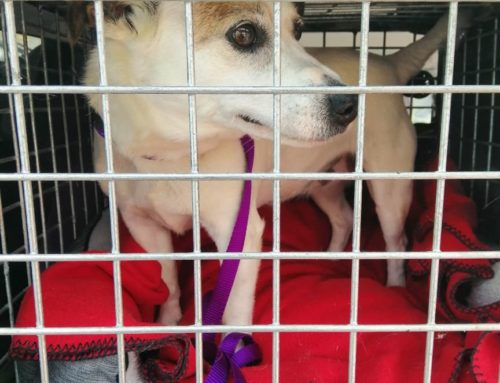 Pompey – Re-Homed Thank you