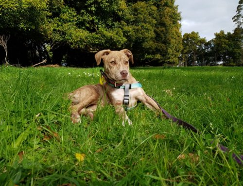 Roxy – Re Homed Thank You!