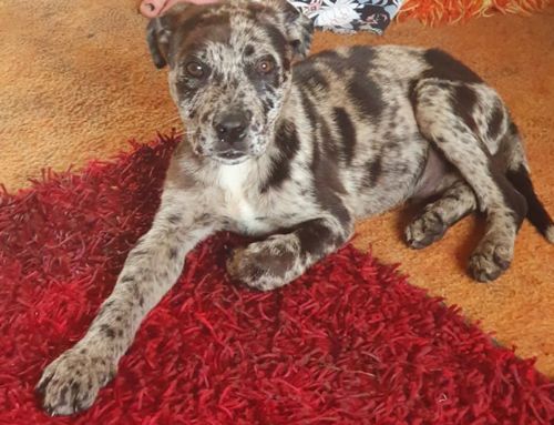 Seale – Re Homed Thank You!